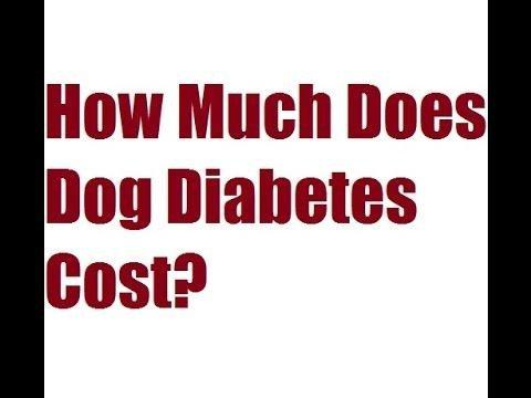 How Much Is Diabetes Medication For Dogs