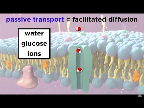 How Does Glucose Move Across A Membrane