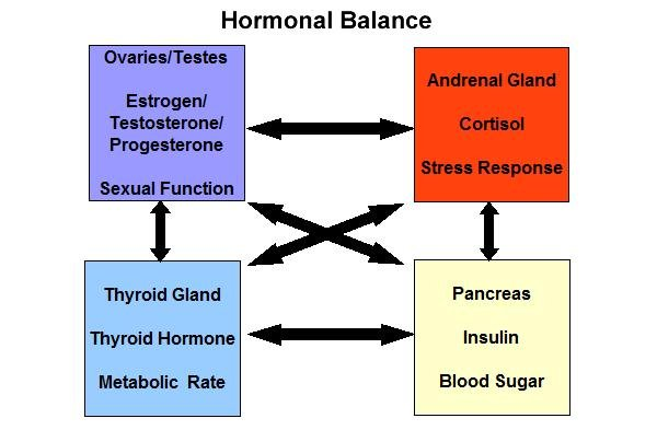 15. Blood Sugar, Estrogen And Hormonal Balance