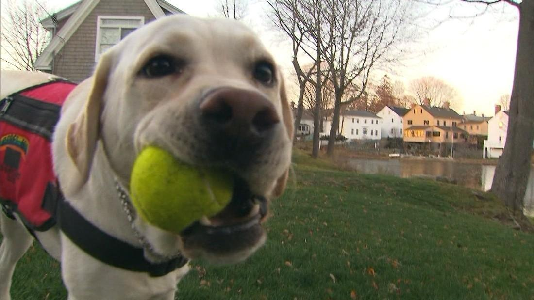 Can A Dog Detect Diabetes?
