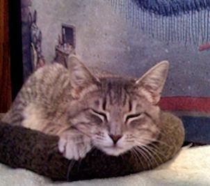 Feline Immunodeficiency Virus: Deciding When To Euthanize
