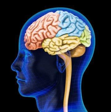 Diabetes Drug Makes Brain Cells Grow