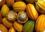 Cacao Stabilizes Blood Sugar; Chocolate May Actually Help Diabetics