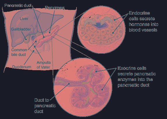 Can A Tumor In The Pancreas Be Benign?