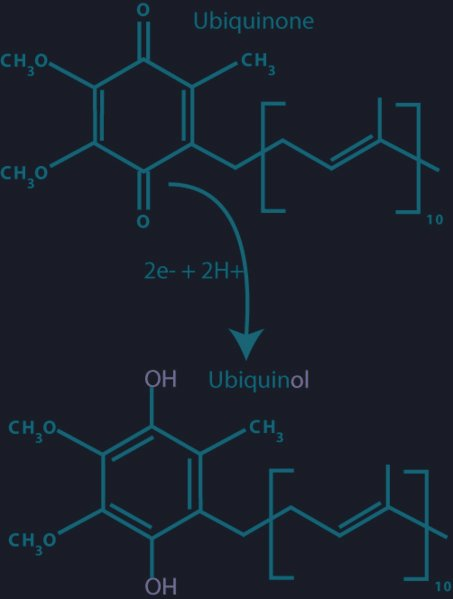 Ubiquinol Side Effects
