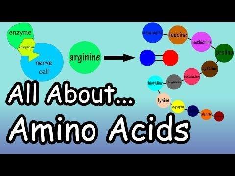Glucogenic Amino Acids
