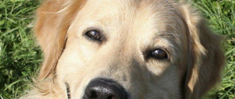 Can My Dogs Diabetes Be Reversed?