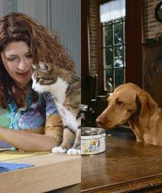 Urine Samples To Monitor Diabetic Dogs And Cats