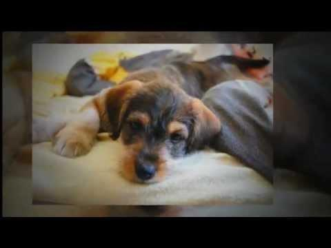 How Long Can A Dog Live With Untreated Diabetes