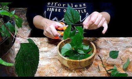 Cinnamon Diabetes Treatment