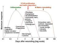 Diabetes And Wound Healing Pathophysiology