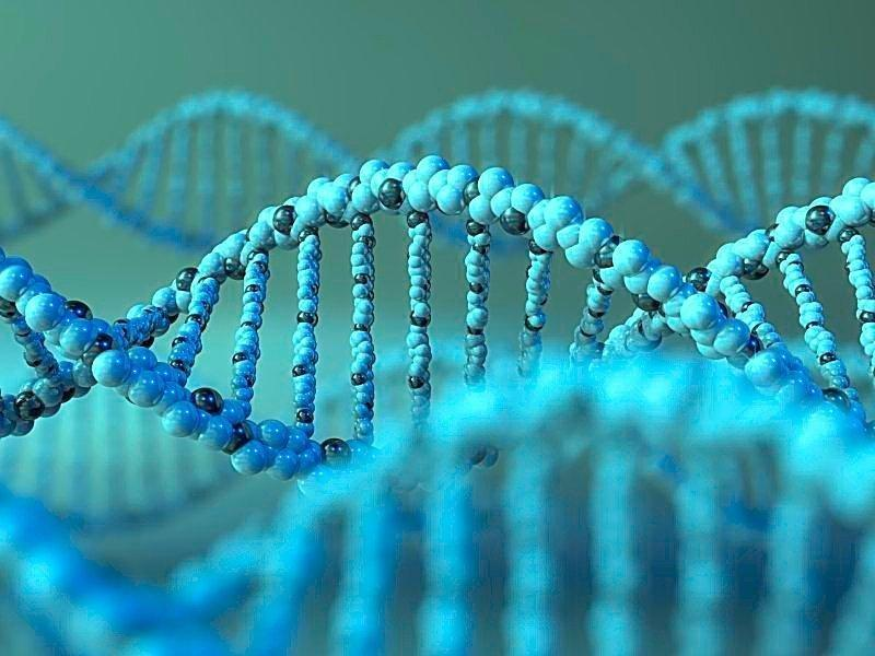 Genetic Research Informs On Timing Of Type 1 Diabetes Development