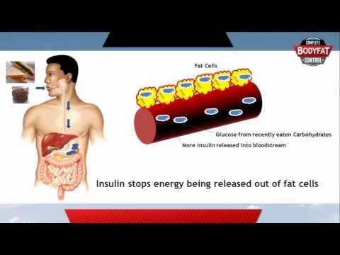 Insulin Promotes Fat Storage Quizlet