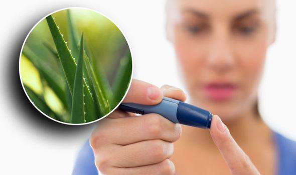 Does Aloe Vera Helps to Manage Diabetes? - Diabetes Self Caring