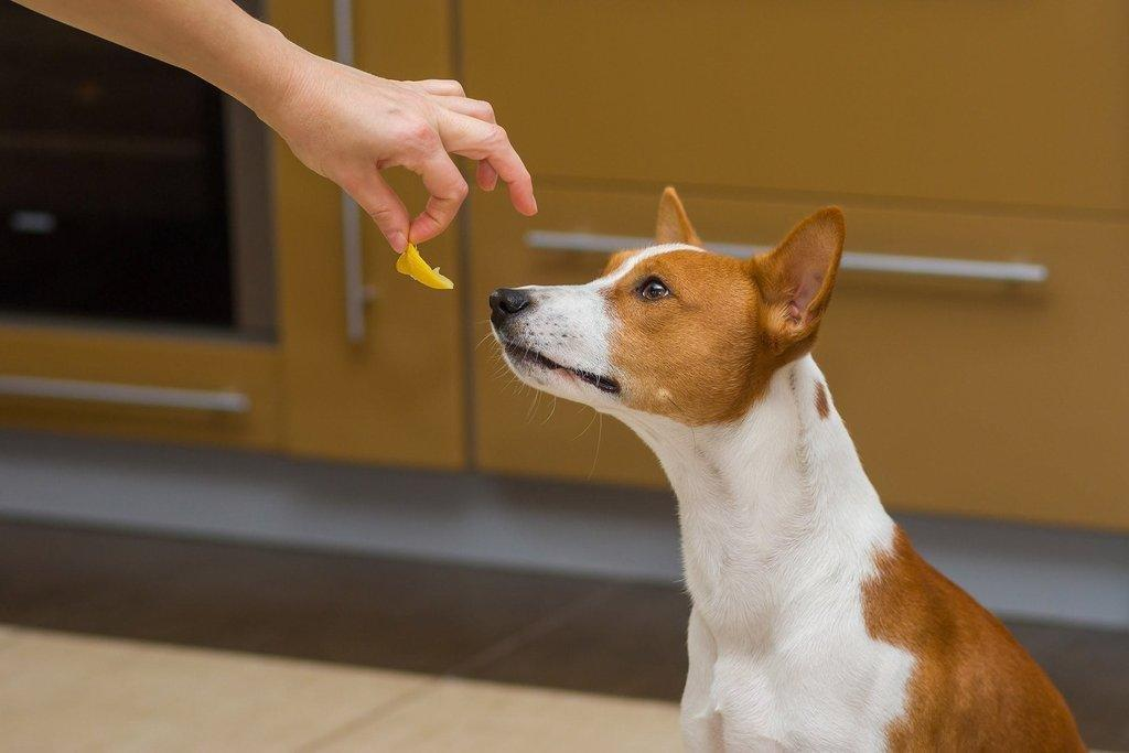 High Cholesterol In Dogs