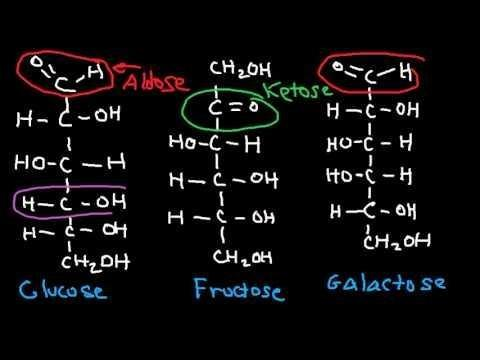 How Are Glucose And Fructose Different?