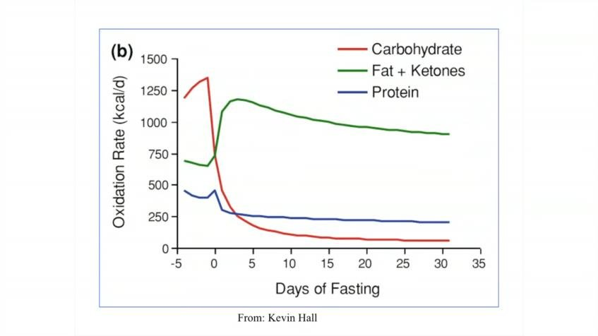 Fasting And Ketosis Part I: What Is Fasting And Why Do People Do It?