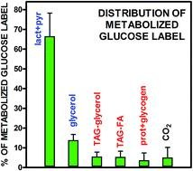 A Method For The Measurement Of Lactate, Glycerol And Fatty Acid Production From 14c-glucose In Primary Cultures Of Rat Epididymal Adipocytes