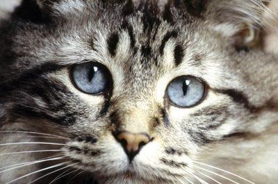 How Can You Tell If Your Cat Has Diabetes?