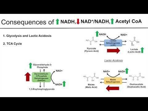 Alcohol Lactic Acidosis Mechanism