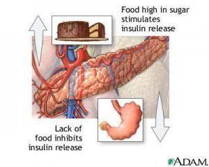How Does Insulin Regulate Glucose?