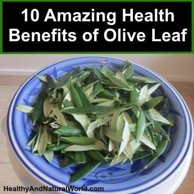 10 Amazing Health Benefits of Olive Leaf and How to Make Your Own Olive Leaf Tea