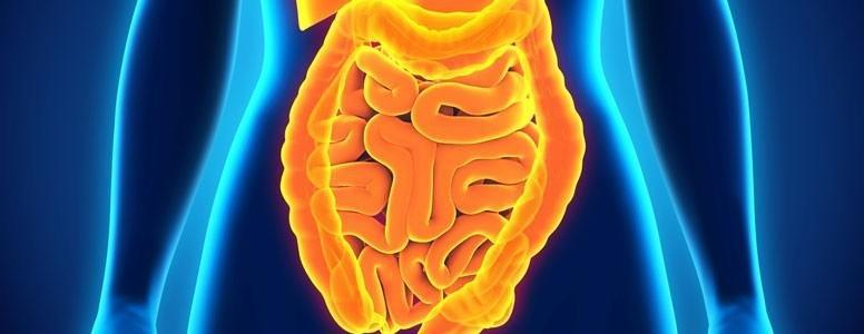 Gut Bacteria Invading Colon Lining Linked To Type 2 Diabetes