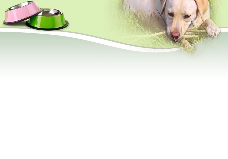 Diabetic Alert Dog Training Cost