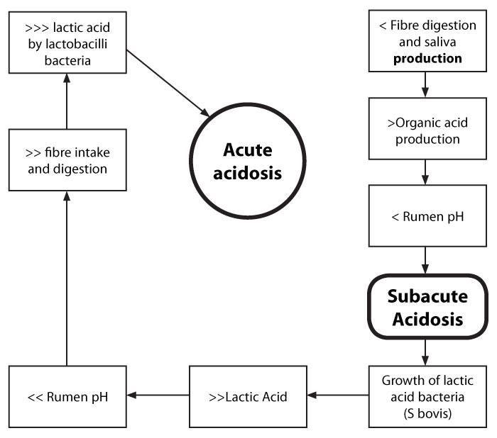 What Are The Causes Of Acidosis In Cattle?