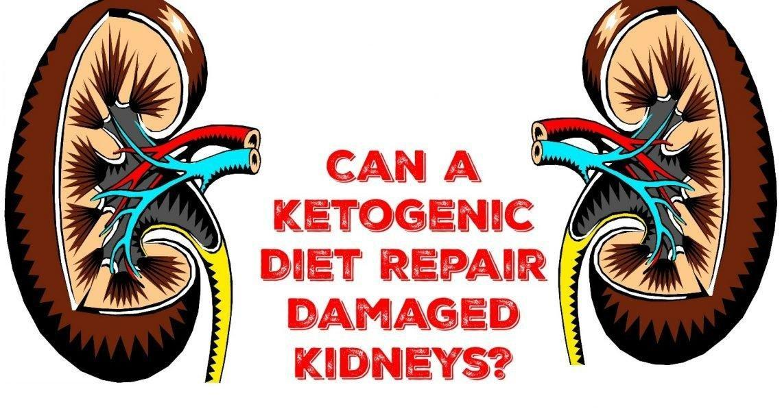 Can A Ketogenic Diet Repair Damaged Kidneys?