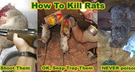 Will Insulin Kill A Rat