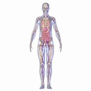What Body Systems Does Diabetes Affect