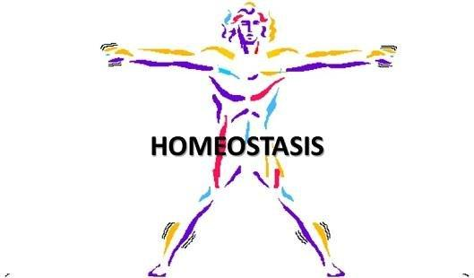Homeostasis Type 2 Diabetes