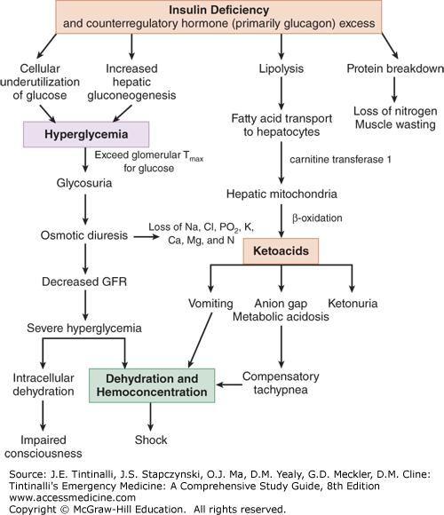 Chapter 225: Diabetic Ketoacidosis