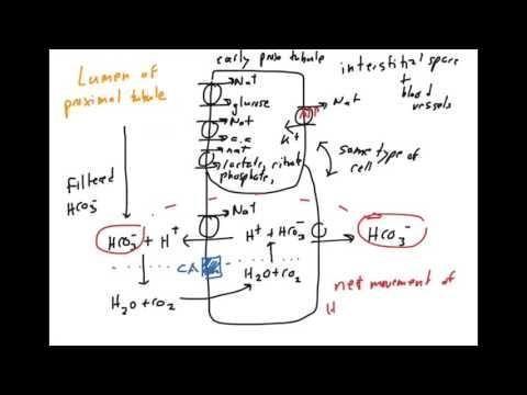 Acetazolamide Metabolic Acidosis Treatment