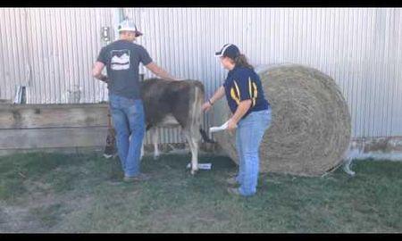 Ketosis In Cattle Merck Manual