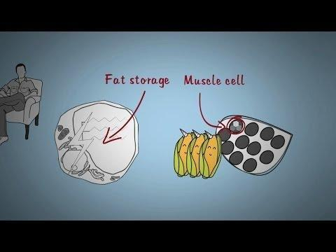 Can The Body Turn Fat Into Glucose?