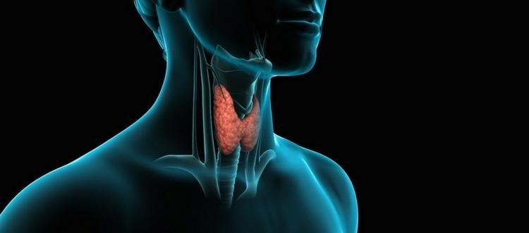 How To Lose Weight With Hypothyroidism