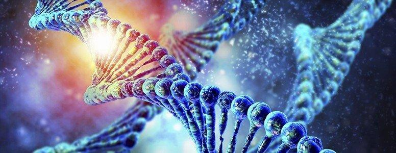 Obesity Study Shows Gene Expression In Fat Cells Determines Response To Insulin