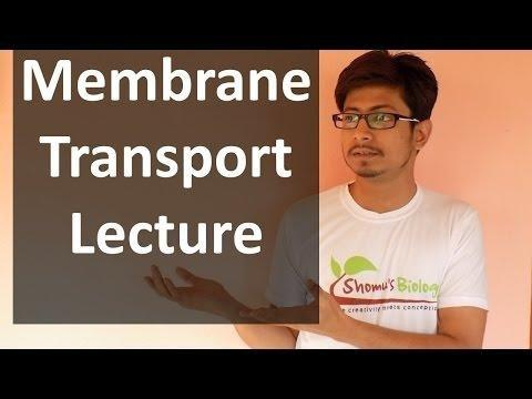 Sugar Transport - An Overview | Sciencedirect Topics