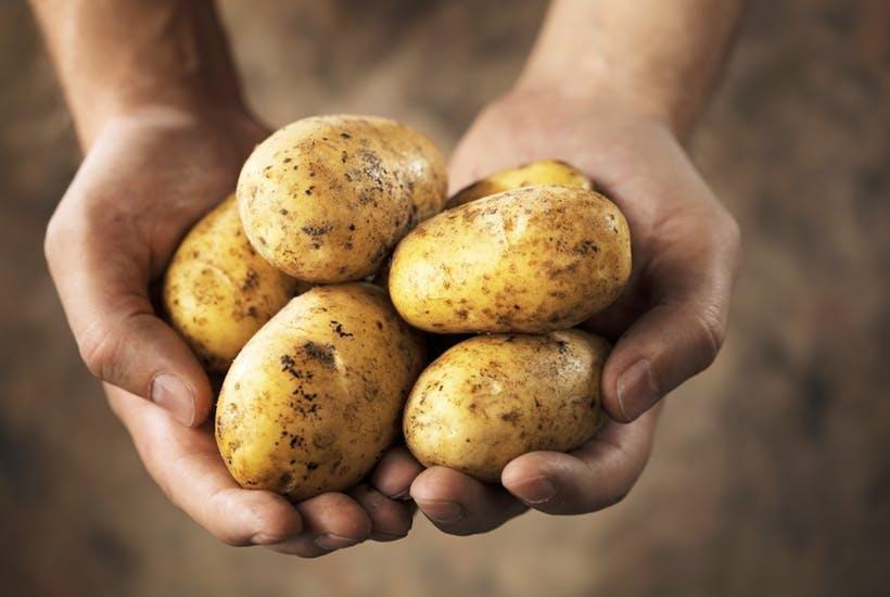 Eating Potatoes Often May Raise The Risk Of Diabetes During Pregnancy