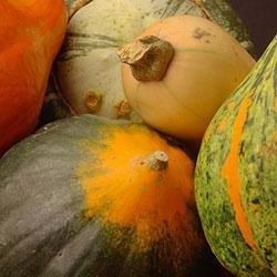 Seasonal Eats: Winter Squash