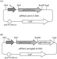 Enhanced Production Of Insulin-like Growth Factor I Fusion Protein In Escherichia Coli By Coexpression Of The Down-regulated Genes Identified By Transcriptome Profiling