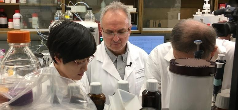 UCalgary researcher signs deal to develop nanomedicines for treatment of Type 1 diabetes