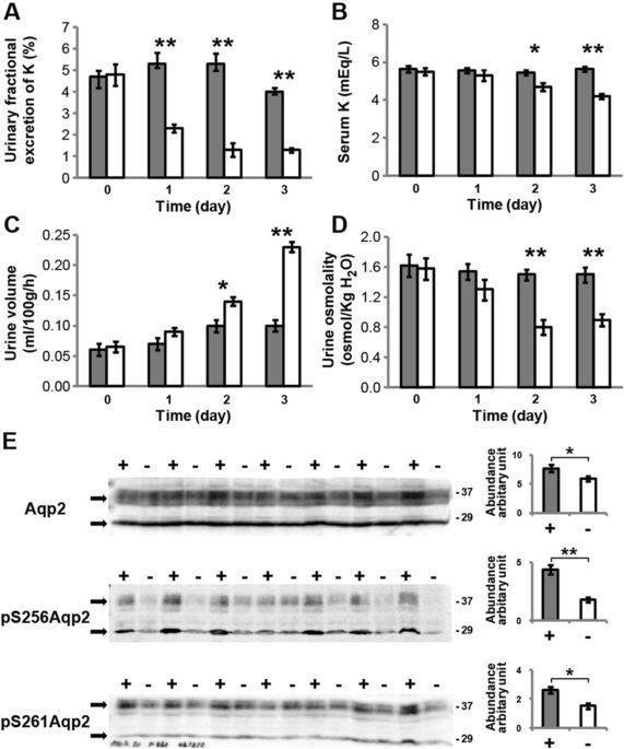 Autophagic Degradation Of Aquaporin-2 Is An Early Event In Hypokalemia-induced Nephrogenic Diabetes Insipidus