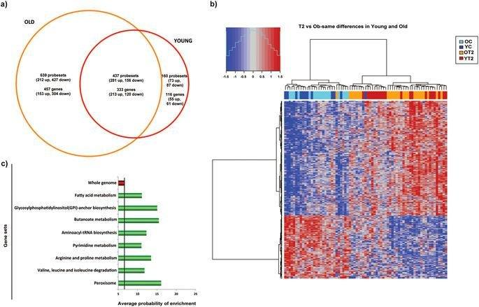 Early-onset and classical forms of type 2 diabetes show impaired expression of genes involved in muscle branched-chain amino acids metabolism