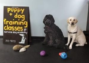 Training Diabetes Alert Dogs