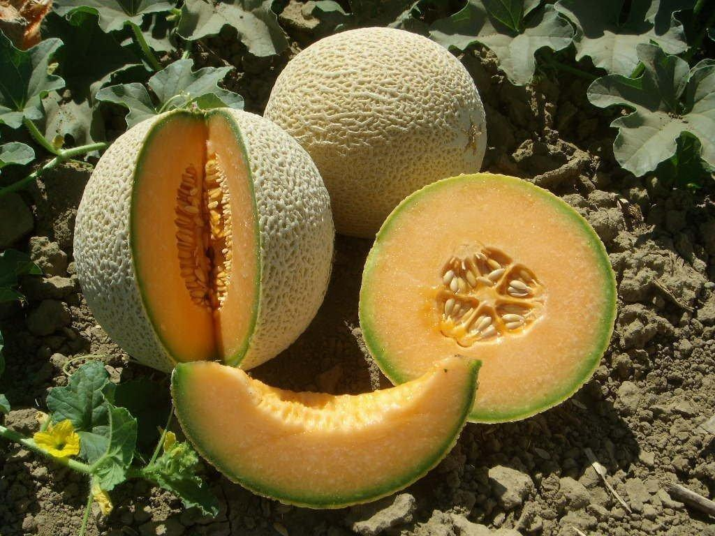 Cantaloupe/musk Melon - Defeat Diabetes Foundation
