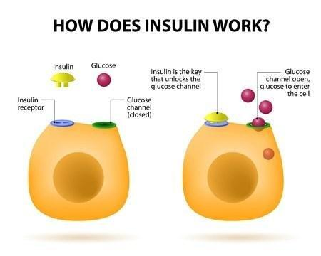 Cancer Cells Have More Insulin Receptors