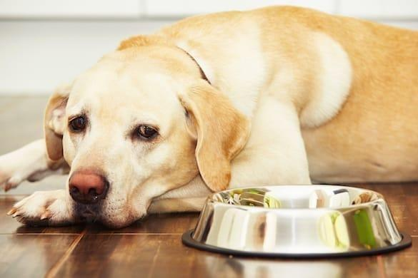 What To Feed A Diabetic Dog That Won't Eat